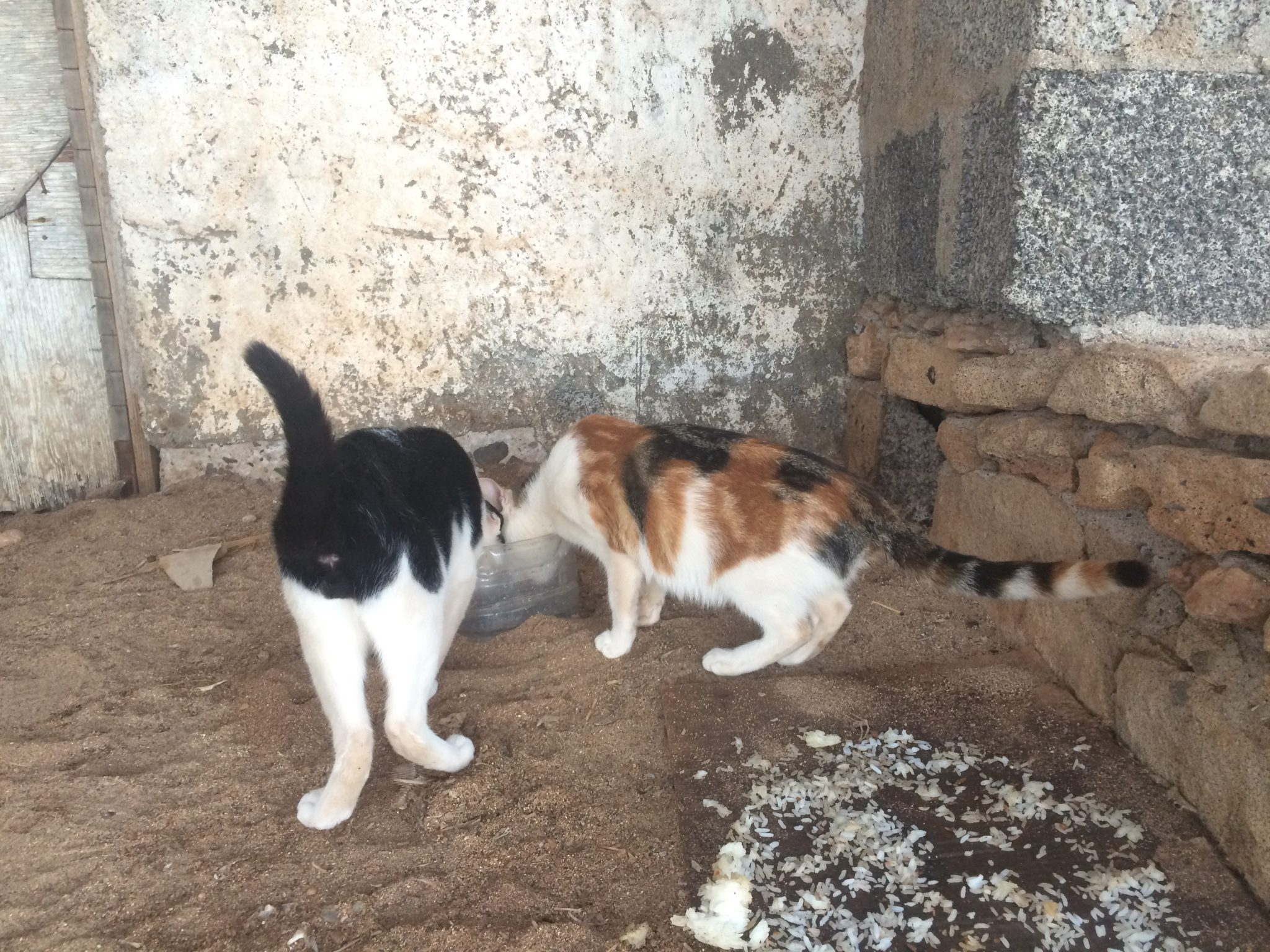 Cats on a deserted beach, Sal Island, Cape Verde
