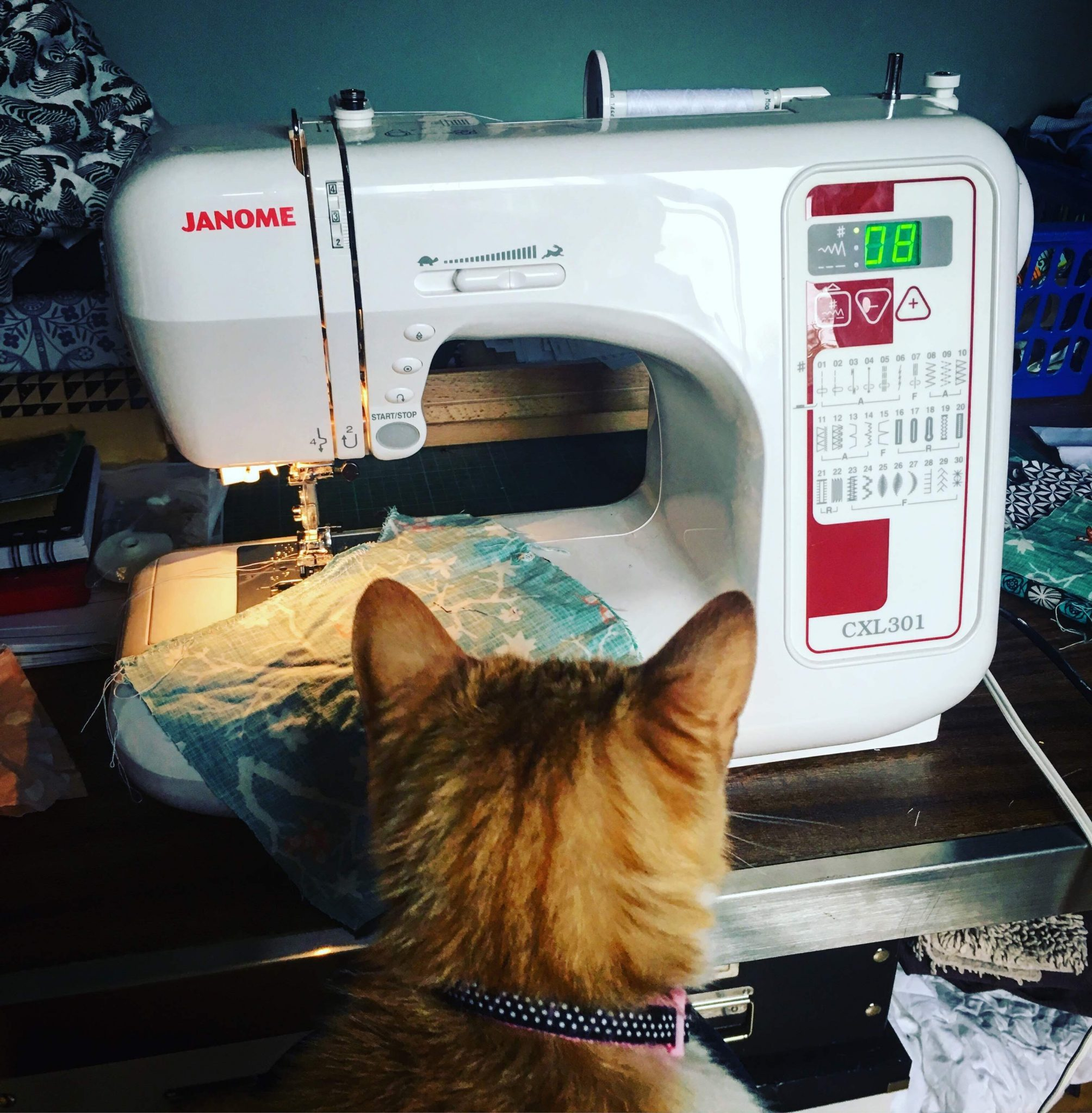 Cat and a sewing machine