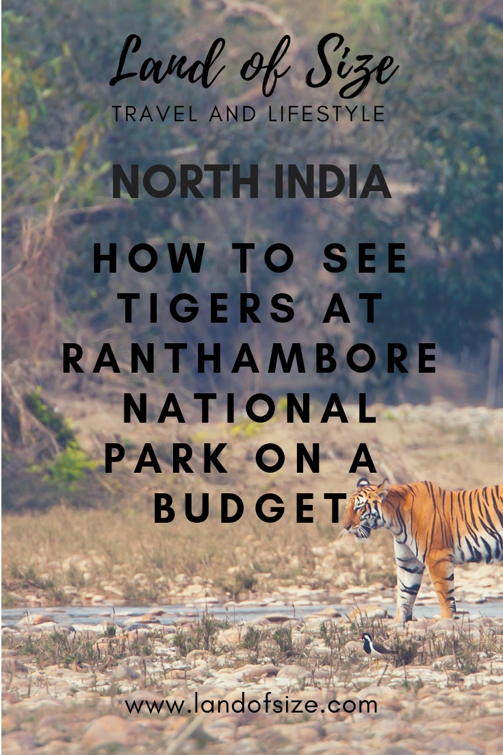 How to visit Ranthambore National Park to see tigers on a backpacker budget