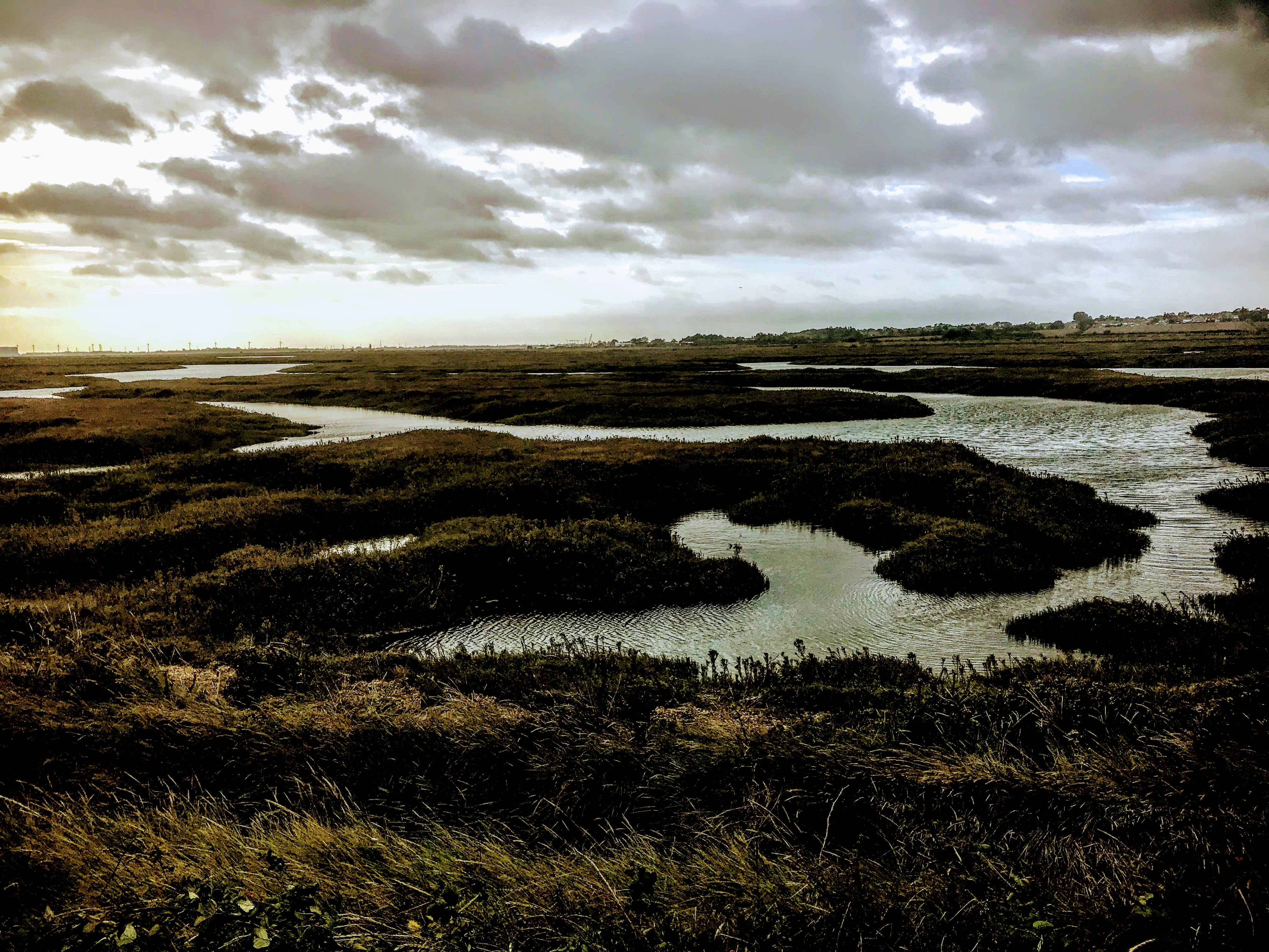 Old Hall Marshes, Essex