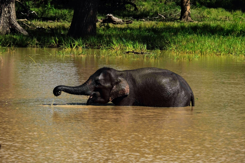 Baby elephant, Yala National Park, Sri Lanka