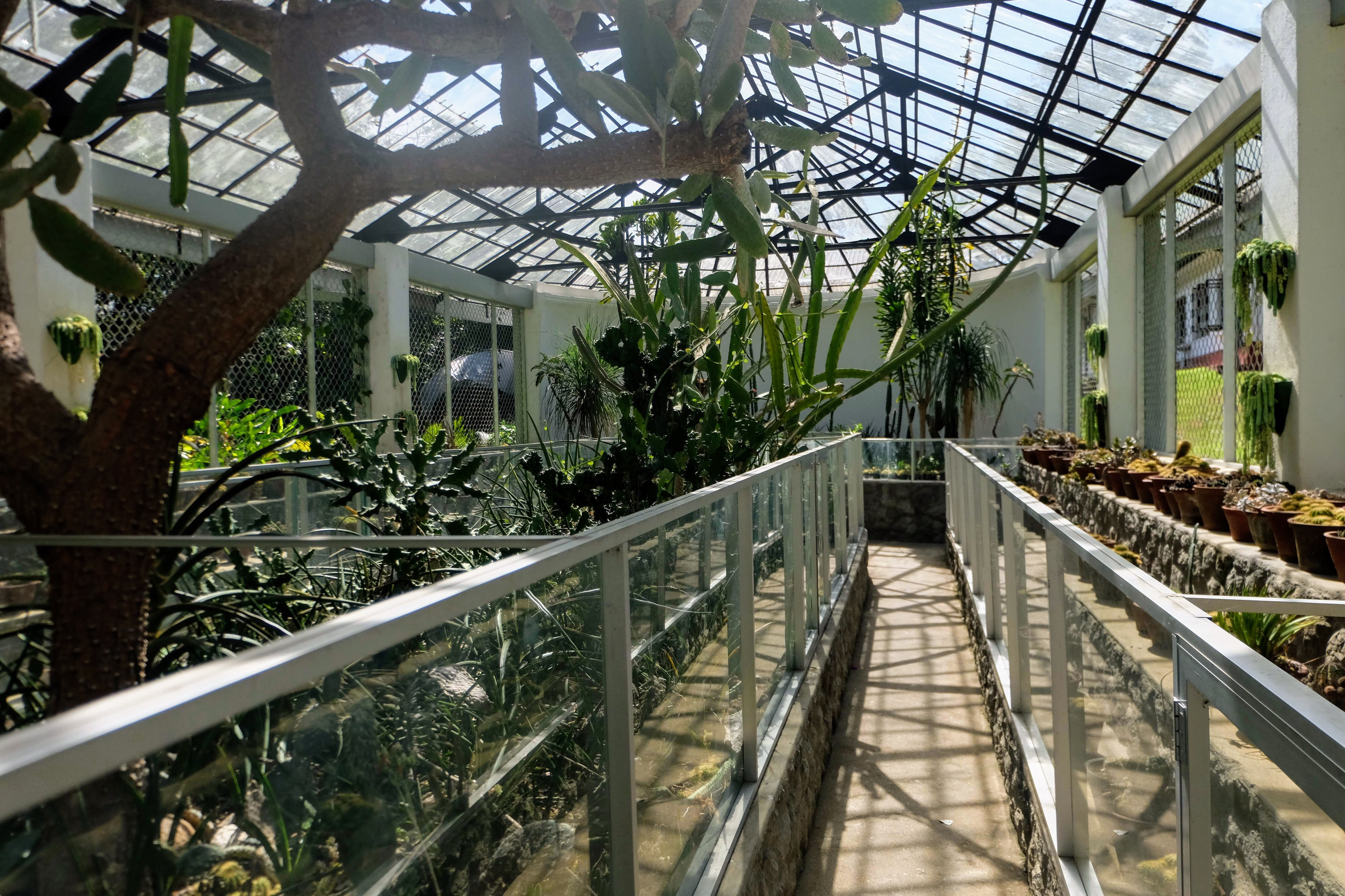Inside a greenhouse in Kandy Botanical Gardens