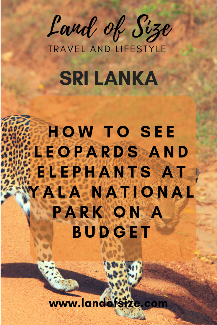 Your guide to leopard and elephant spotting at Yala National Park in Sri Lanka