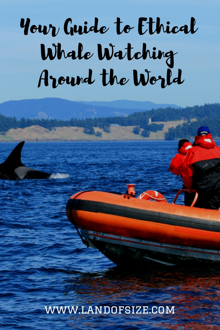 How to make sure that your whale watching tour is enjoyable and ethical
