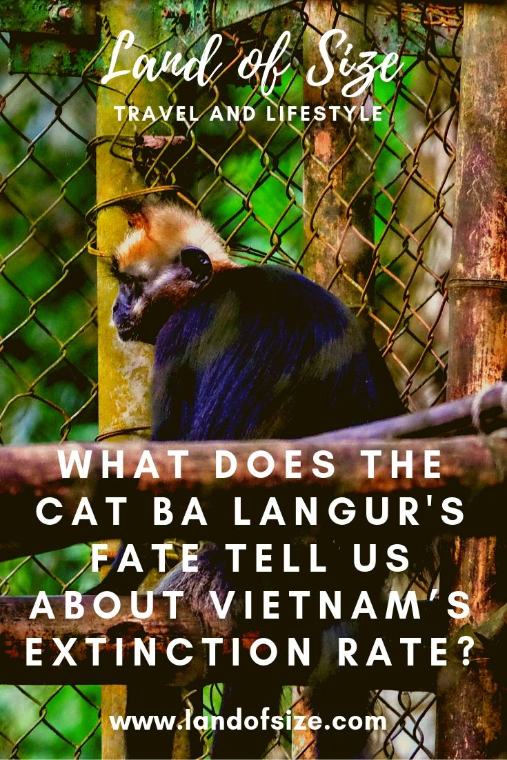 What does the Cat Ba langur's fate tell us about Vietnam's extinction rate?