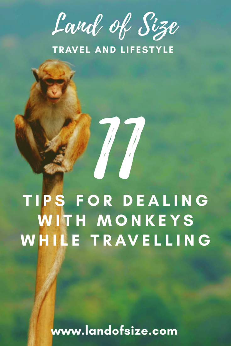 11 top tips for dealing with monkeys while travelling in Asia and beyond