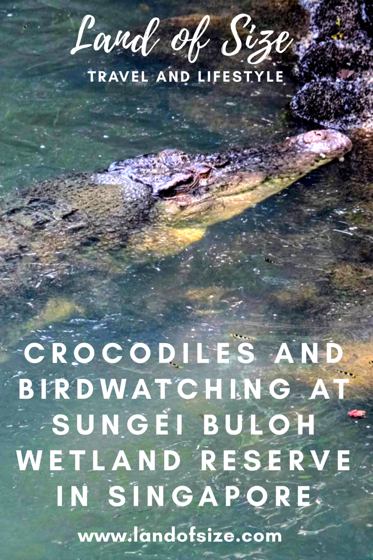 Crocodiles and birdwatching at Sungei Buloh Wetland Reserve in Singapore