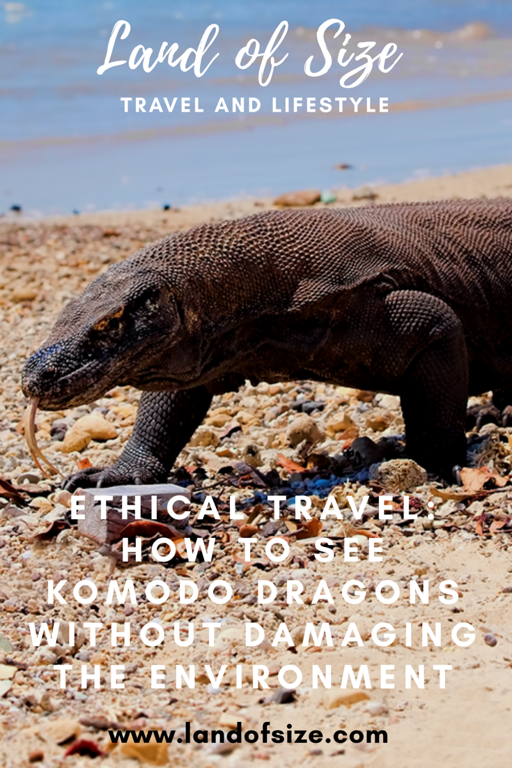Ethical Travel: How to see Komodo dragons without damaging the environment
