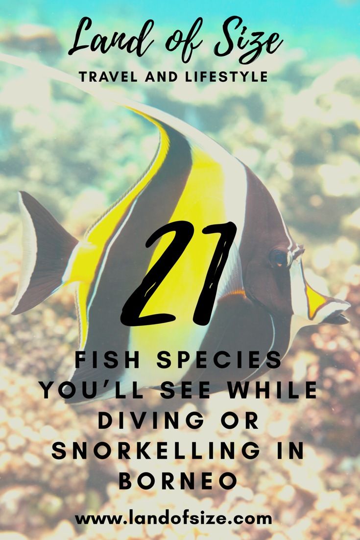 21 fish species you'll see while diving or snorkelling in Borneo
