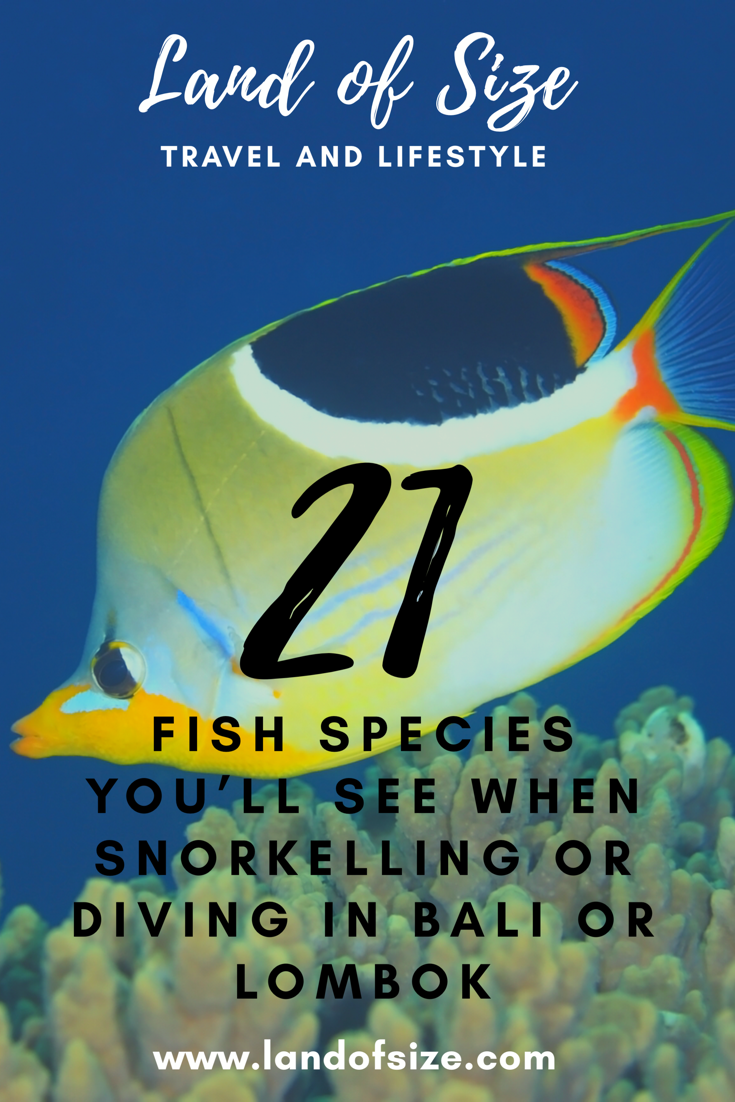 21 fish species you'll see when snorkelling or diving in Bali or Lombok