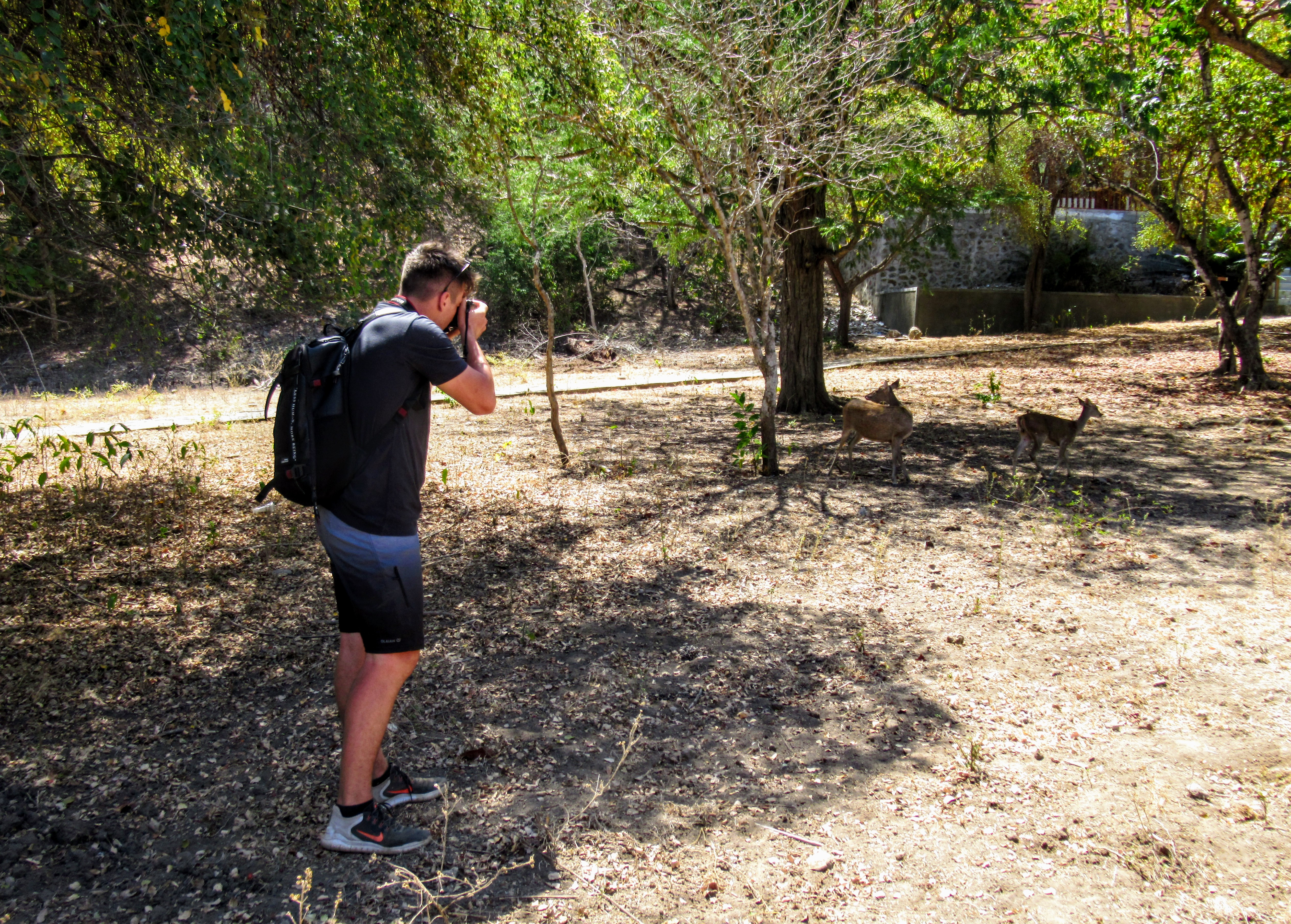 Tourist photographing deer on Komodo Island, Indonesia