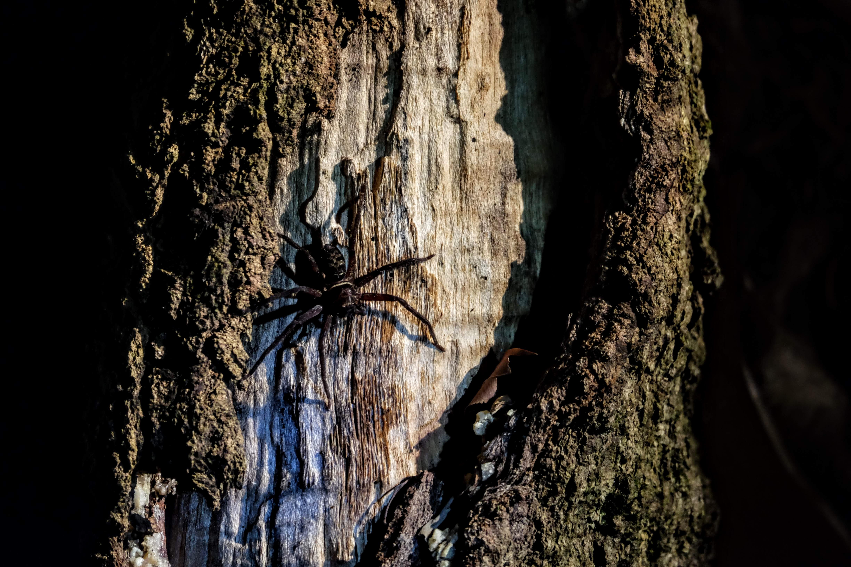 Spider, Sepilok, Borneo