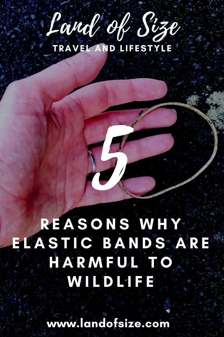 5 reasons why elastic bands are harmful to wildlife