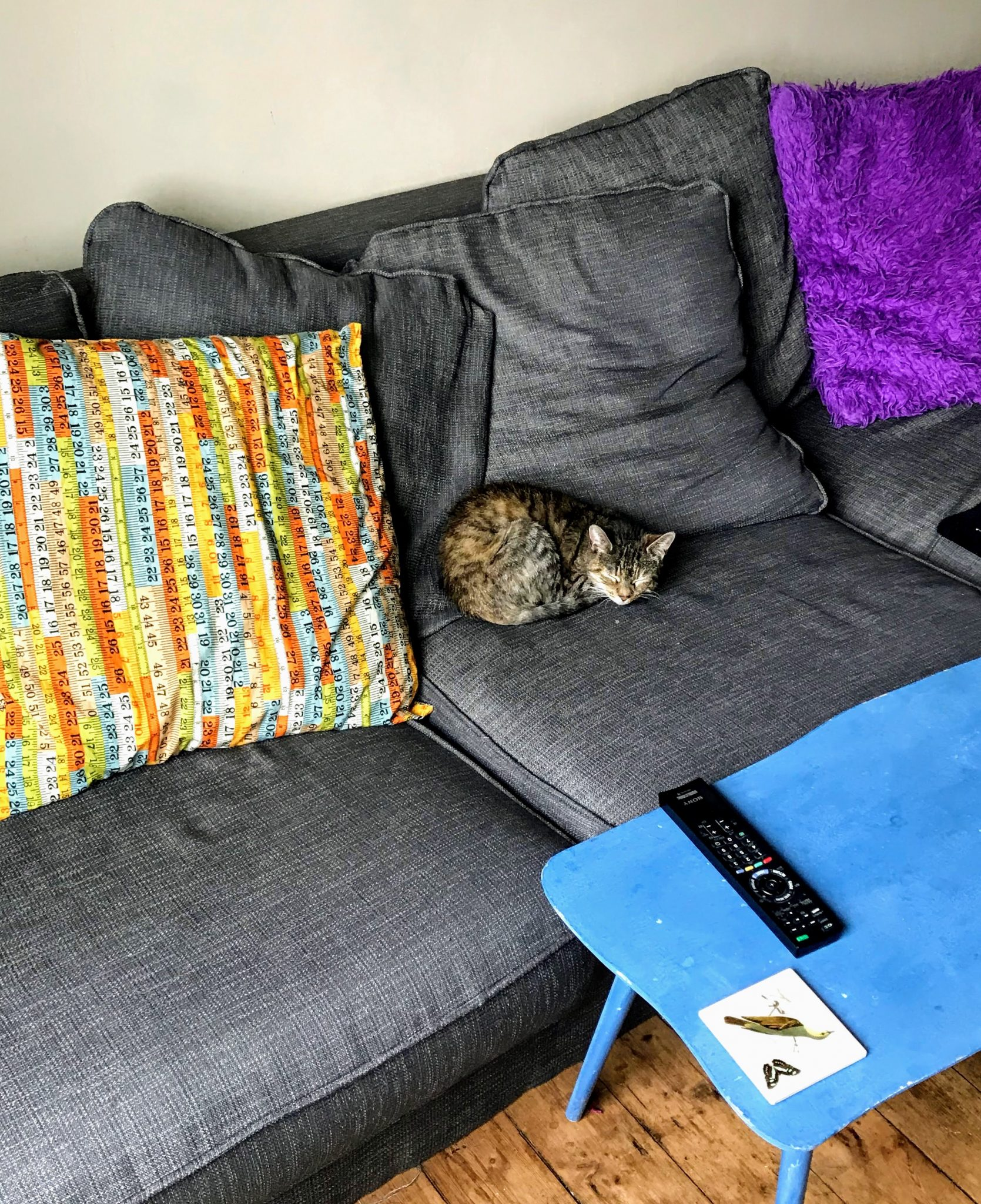 Cat on the newly upholstered sofa