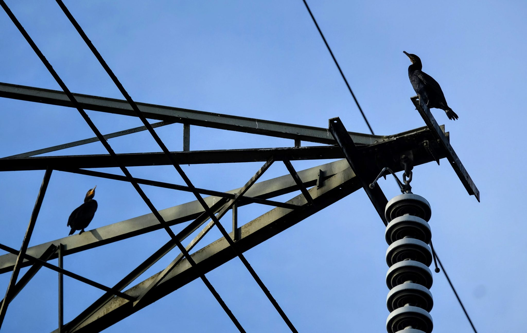 Cormorants on a pylon, Sale Water Park, Manchester