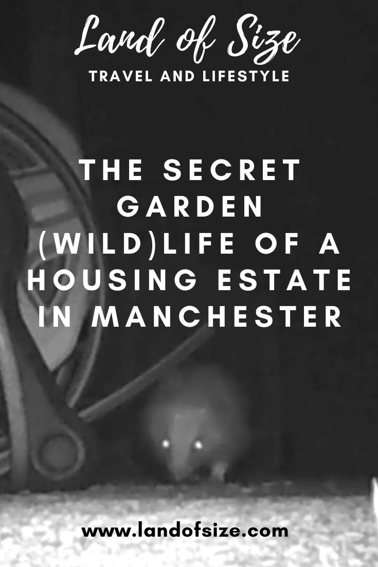 The secret garden (wild)life of Merseybank Estate in Manchester