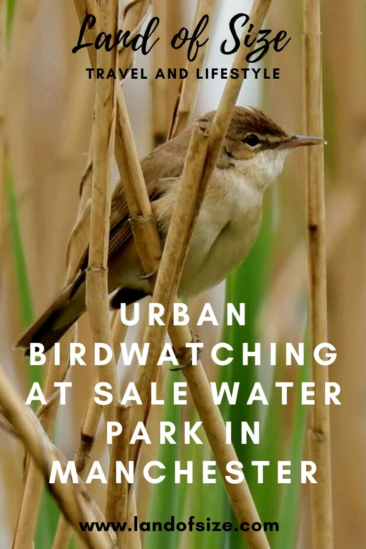 Urban birdwatching at Sale Water Park and Sale Ees in Manchester