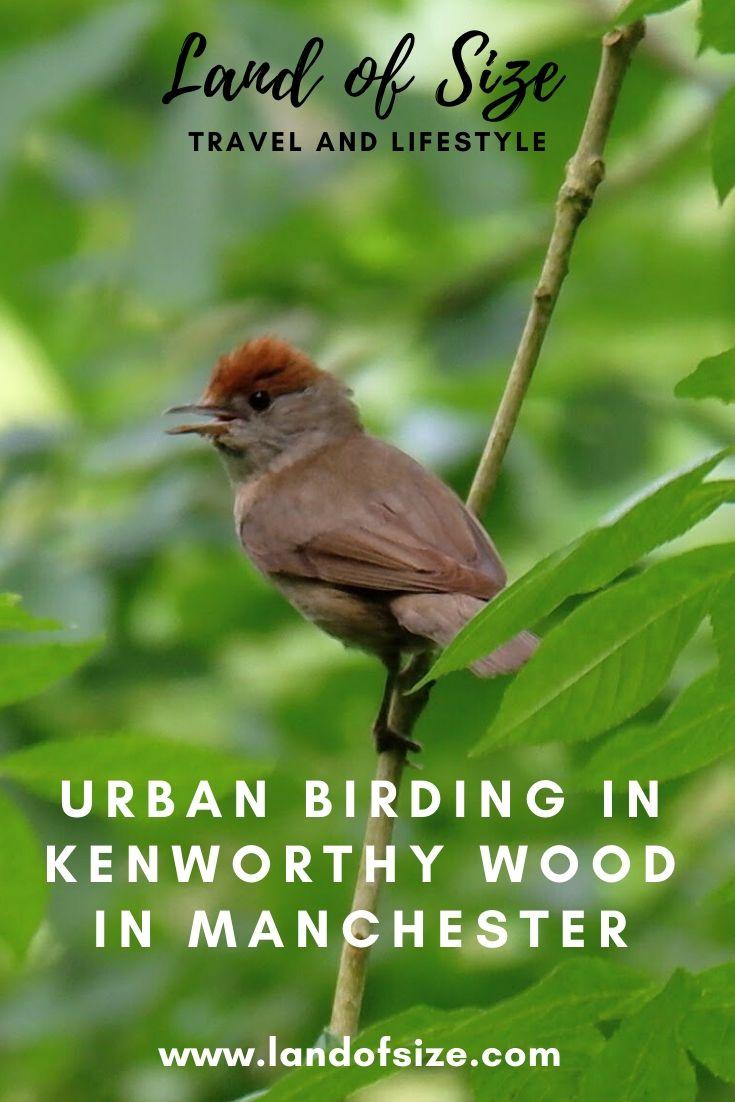 Urban birding in Kenworthy Wood in Manchester