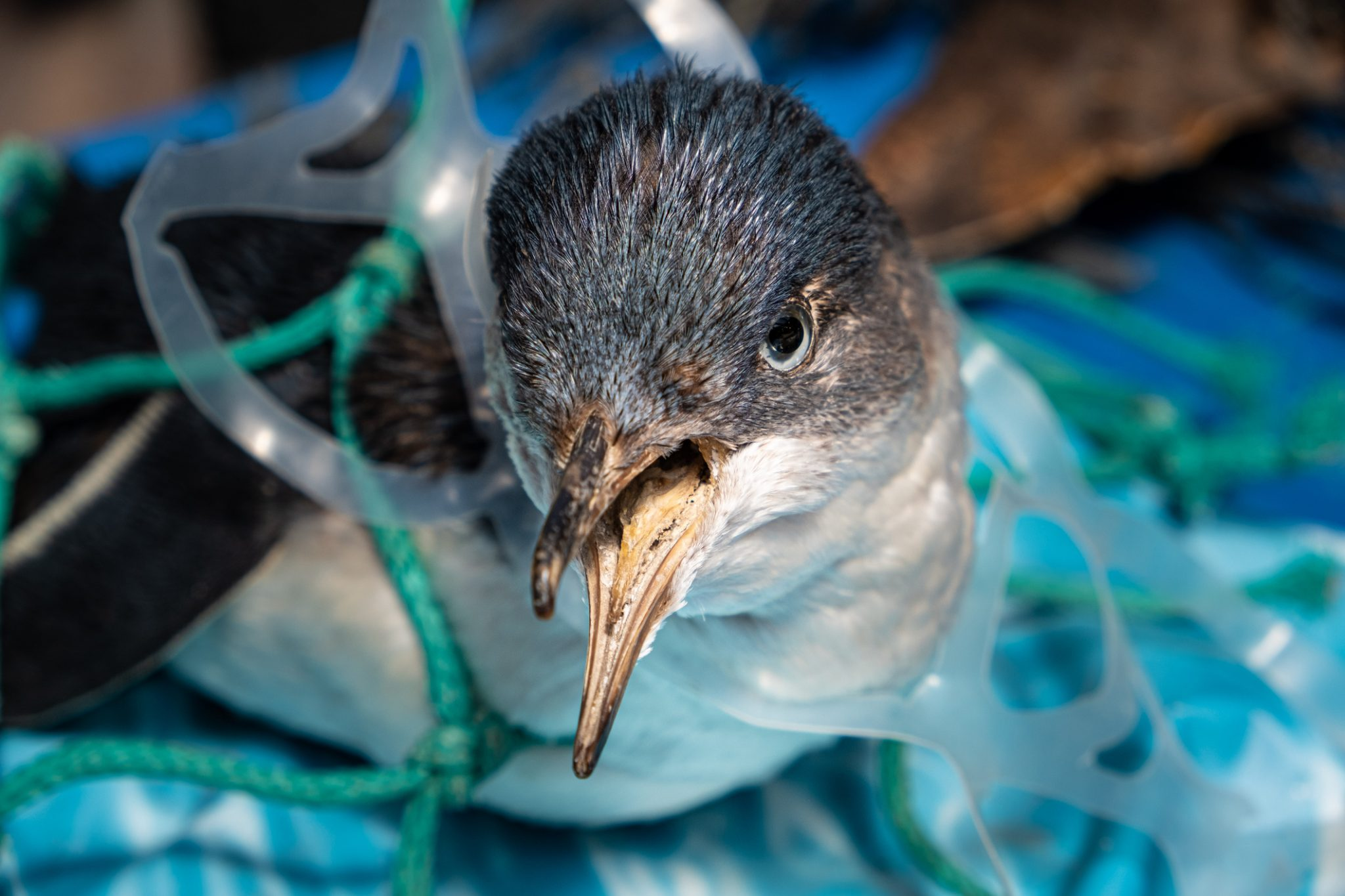 11 acts of activism to save the oceans