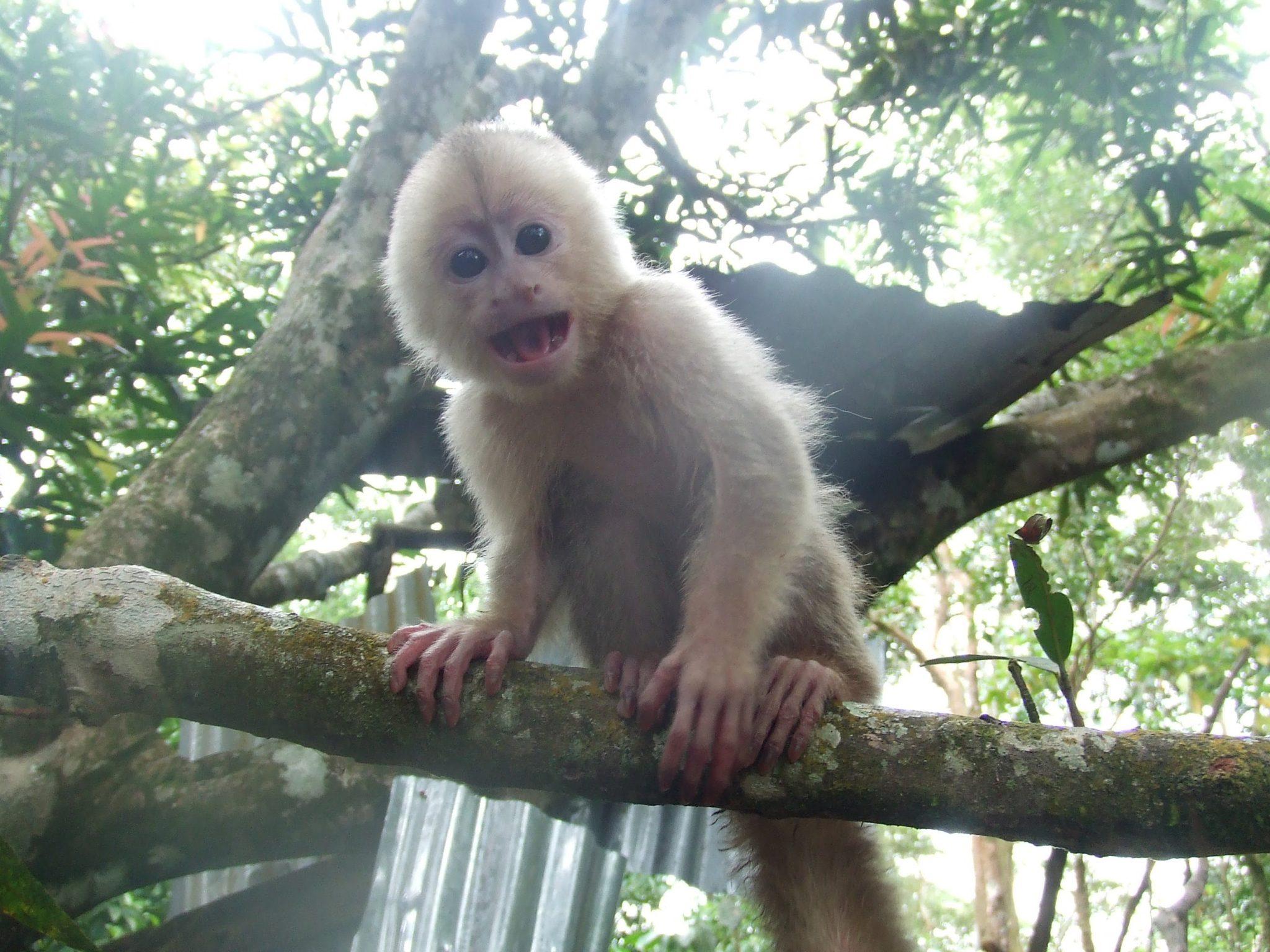 Diego the monkey