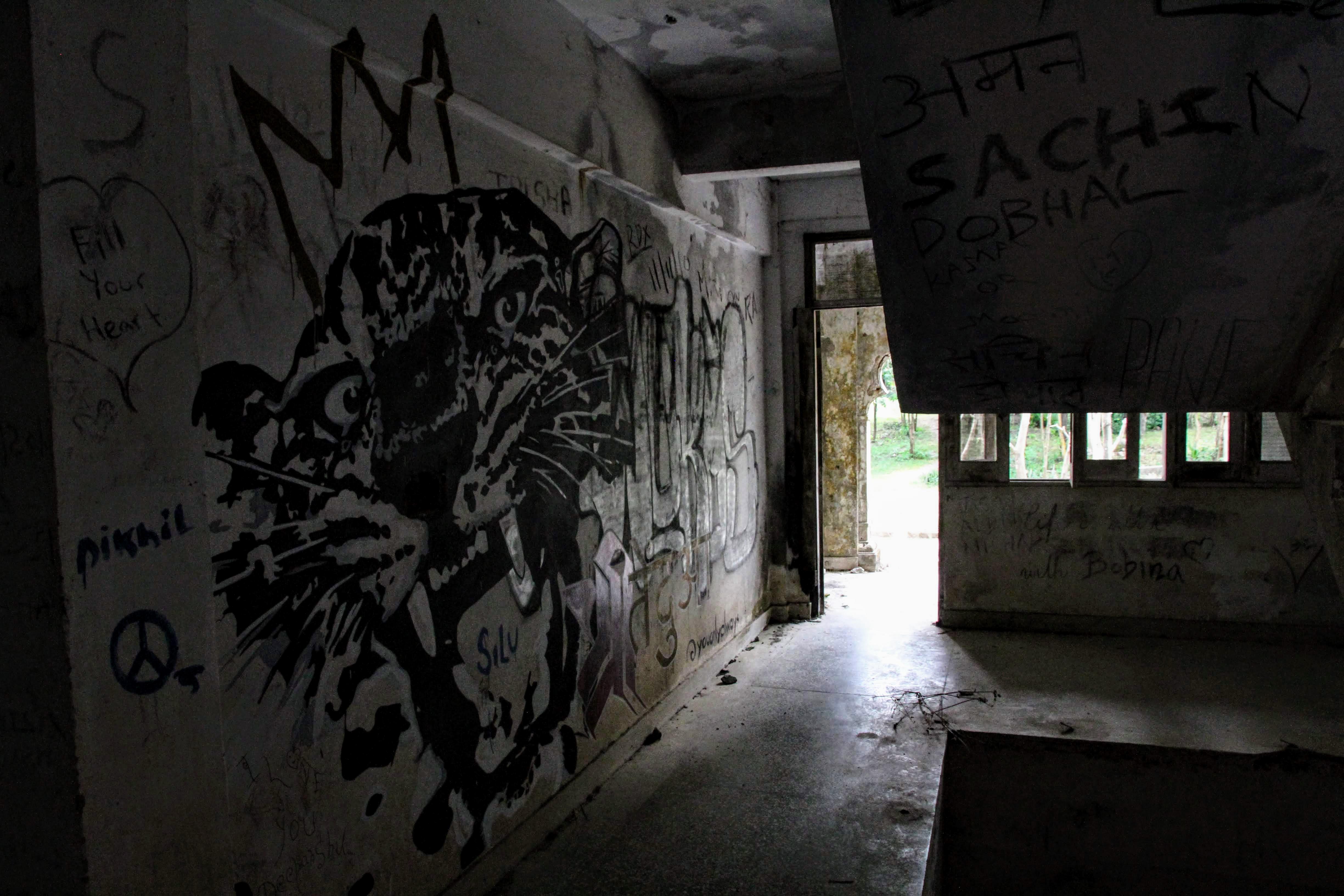 Tiger graffiti in the flats, The Beatles Ashram, Rishikesh