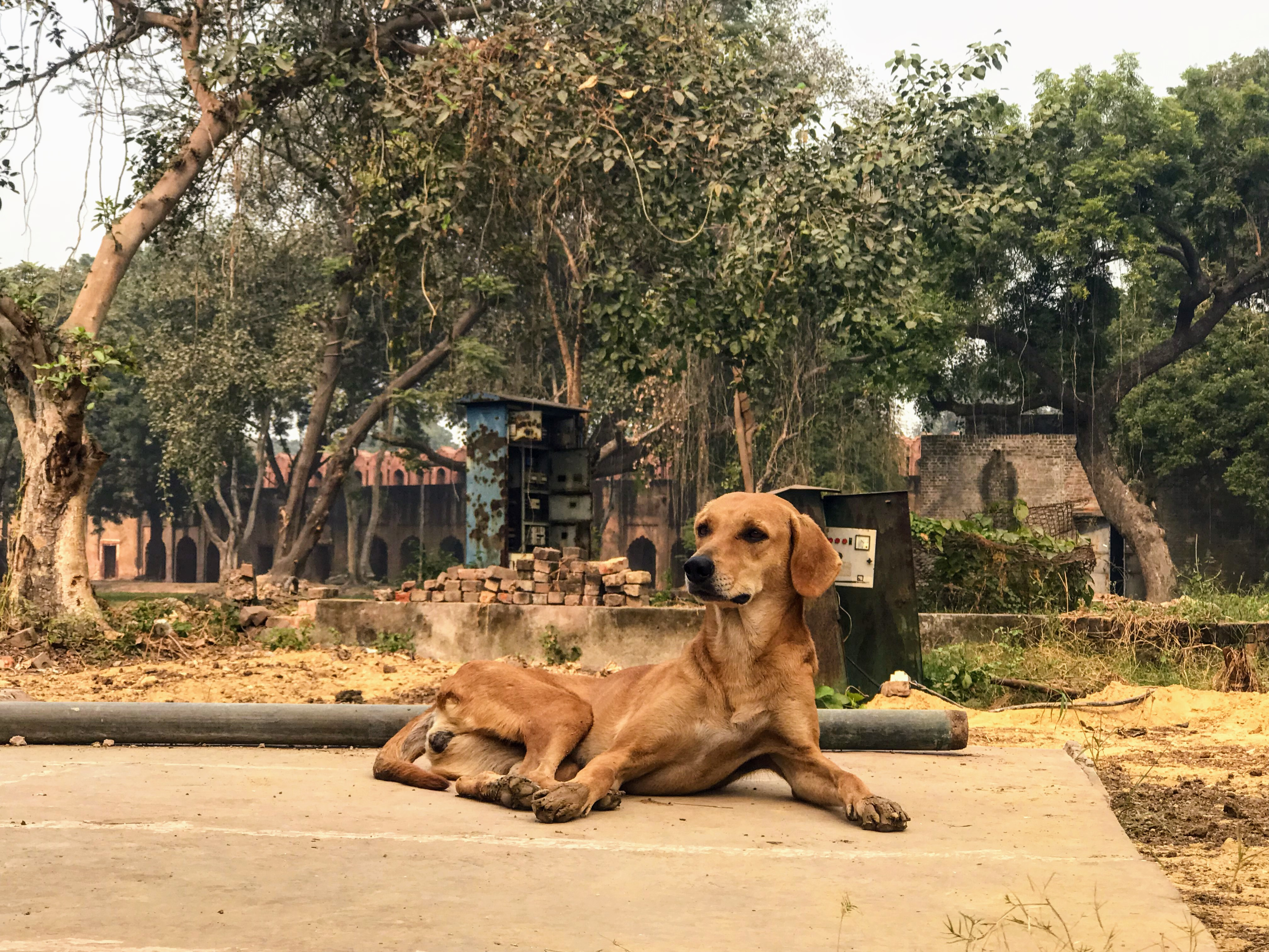 5 tips for dealing with stray dogs while travelling