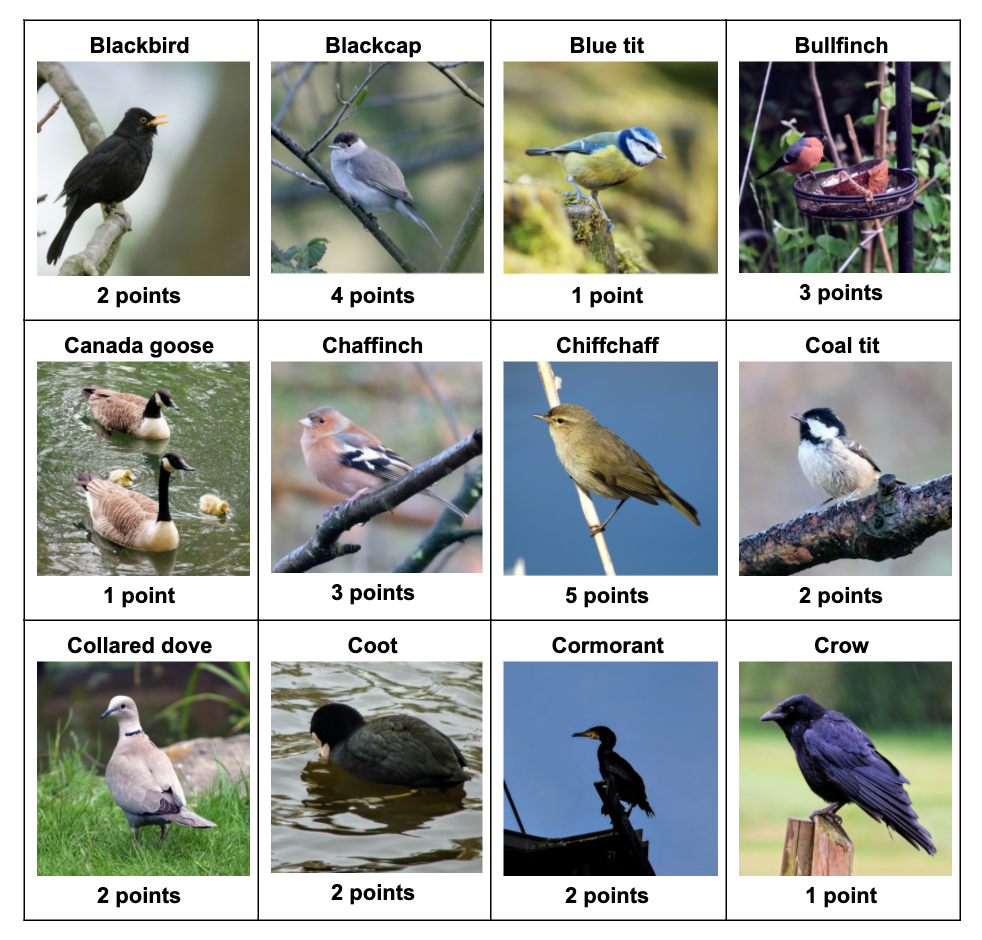 Lockdown fun: Play Birdy Bingo with your kids!