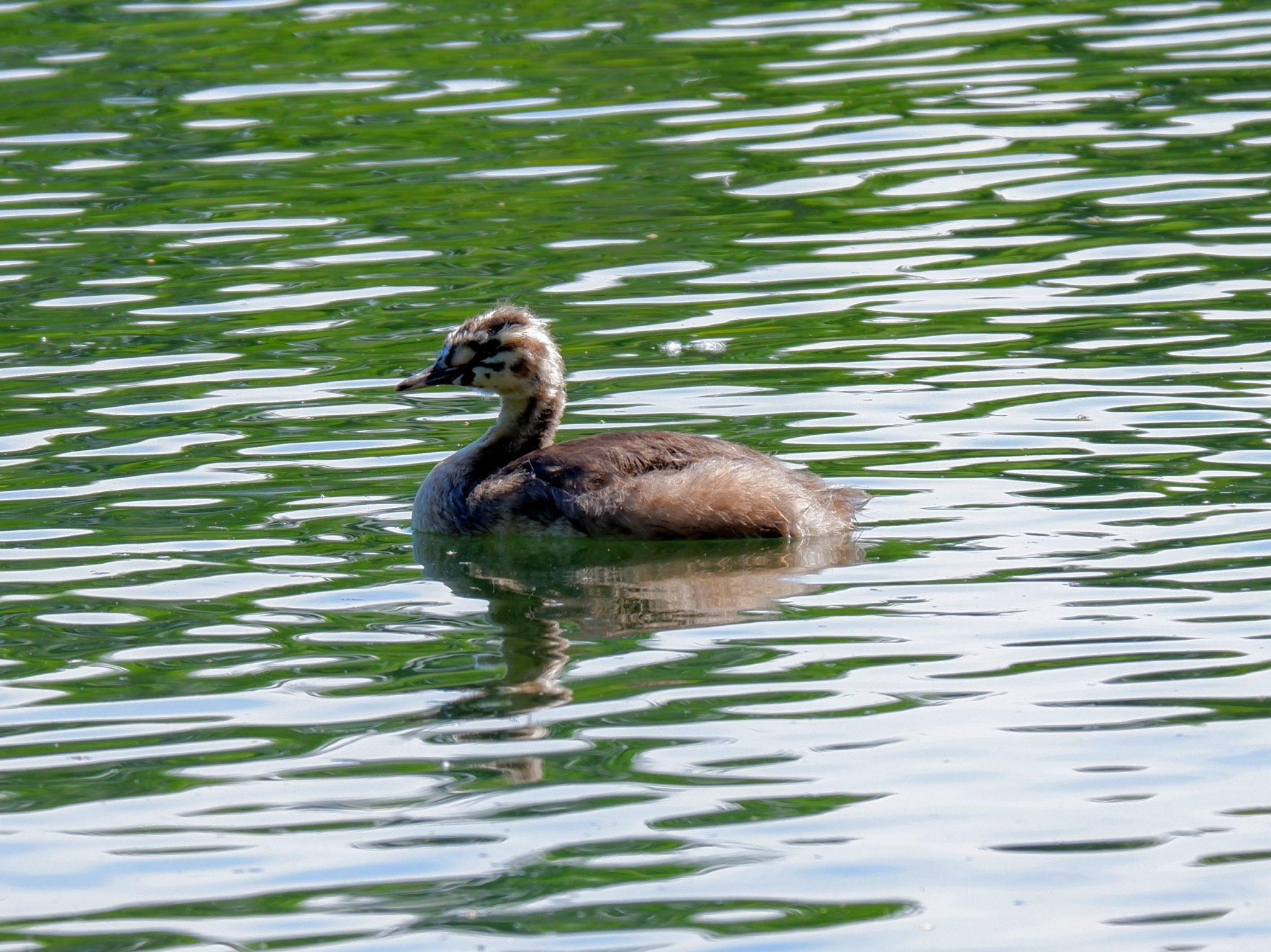 Urban wildlife in Chorlton Water Park in Manchester
