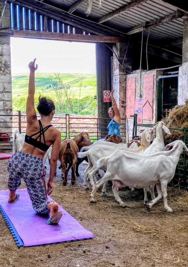 Manchester staycation inspiration: Goat yoga in Rossendale