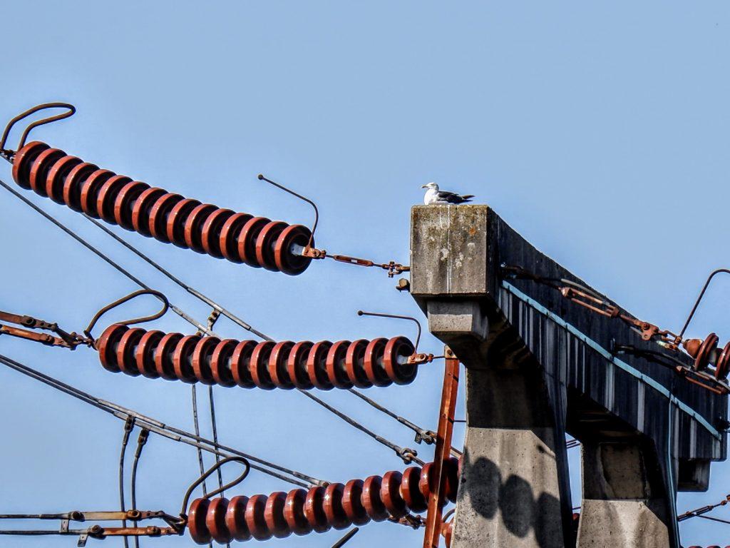 Herring gull on a power station