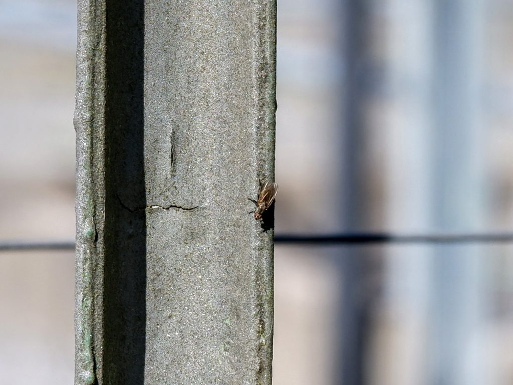 Fly at a power station