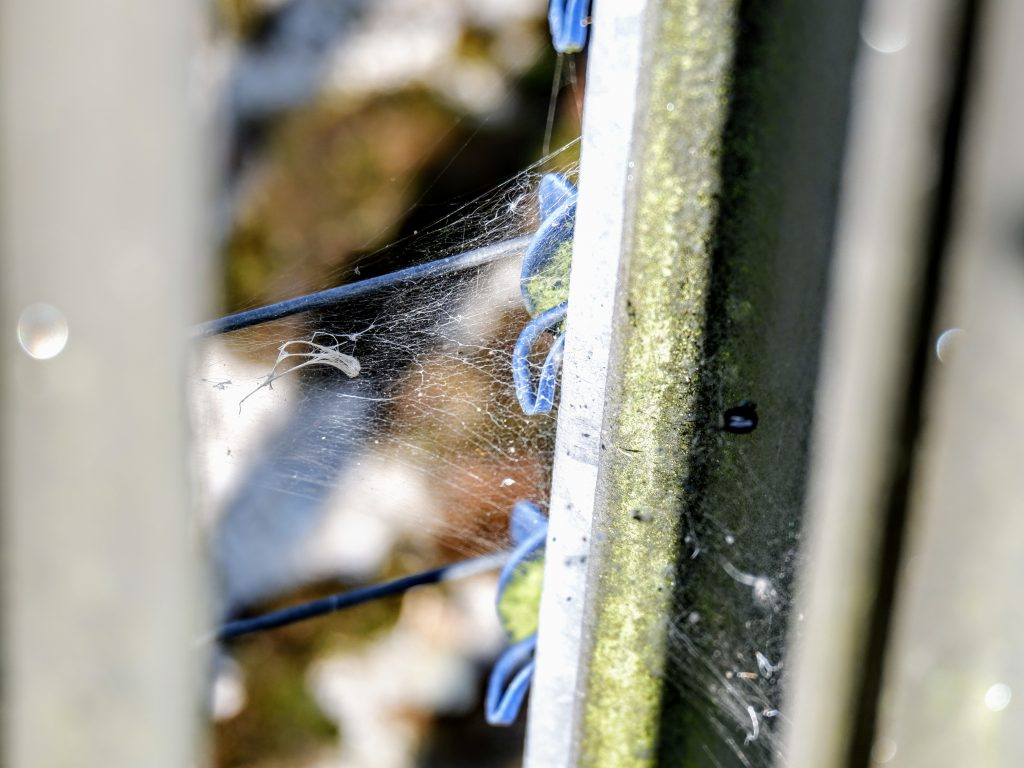 Spider web at a power station